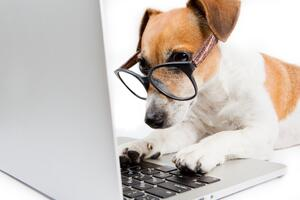 tan and white dog wearing glasses at laptop