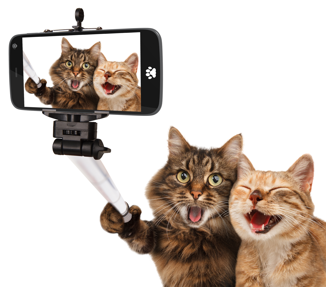 20180917_Cat Selfie